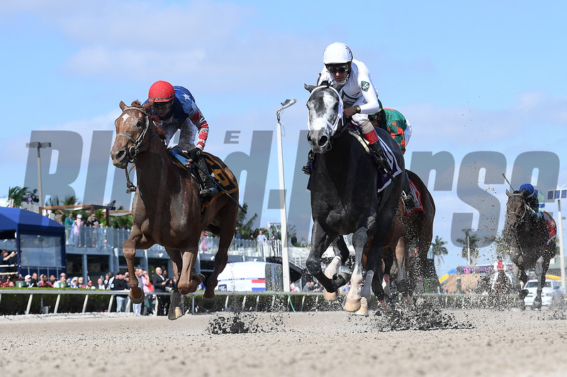 Market Analysis wins 2020 Maiden at Gulfstream Park. Photo: Mathea Kelley