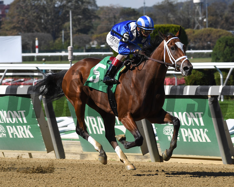 Malathaat wins maiden special weight October 9, 2020 at Belmont Park. Photo: Coglianese Photos/Chelsea Durand