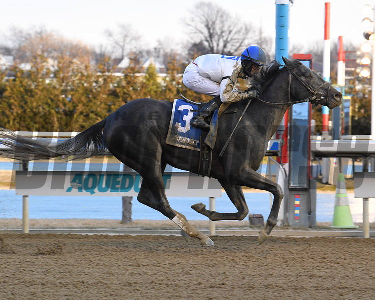 Montauk Traffic wins 2020 Jimmy Winkfield Stakes at Aqueduct Racetrack. Photo: Coglianese Photos