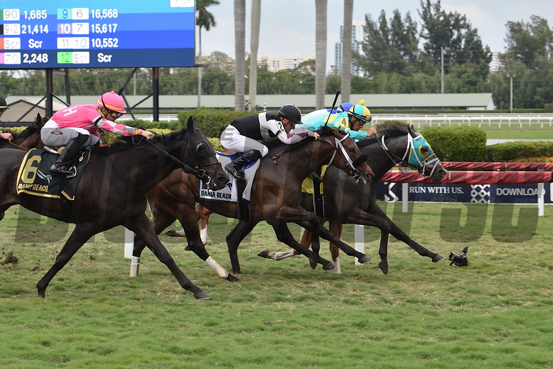 Field Pass wins the 2020 Dania Beach at Gulfstream Park<br /> Coglianese Photos