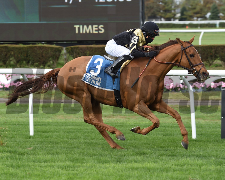 Devamani wins the Knickerbocker Stakes Sunday, October 18, 2020 at Belmont Park. Photo: Coglianese Photos