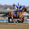 Now and Again - Maiden Win, Aqueduct, February 23, 2020<br /> Coglianese Photos