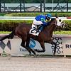 Warrior's Pride - AOC, Gulfstream Park, December 4, 2020<br /> Coglianese Photos/Ryan Thompson