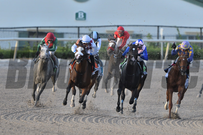 Tiz the Law wins the 2020 Florida Derby at Gulfstream Park. Photo: Coglianese Photos/Nikki Bernstein