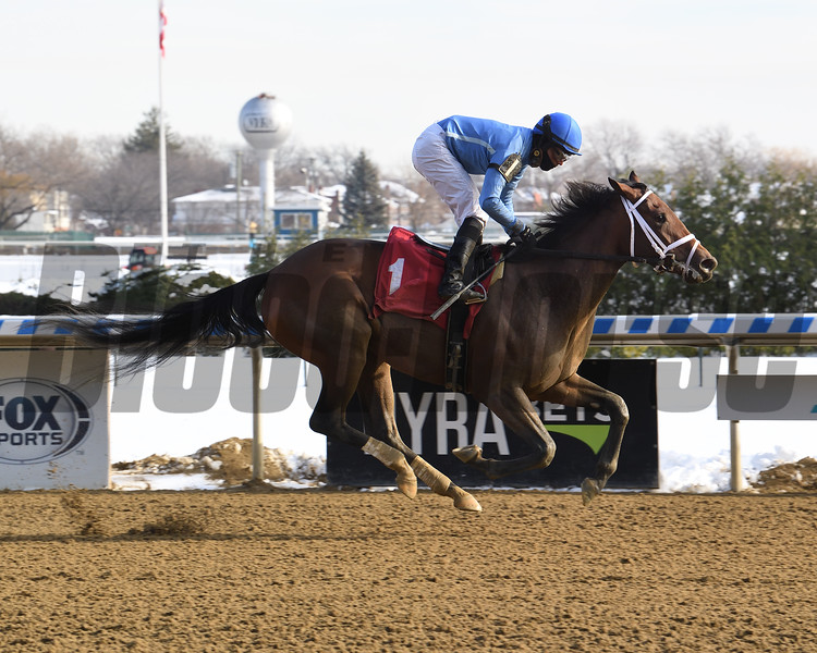 Pleasure Luck wins maiden special weight Saturday, December 19, 2020 at Aqueduct. Photo: Coglianese Photos