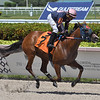 Queen Arella - Maiden Win, May 29, 2020<br /> First winner for Speightster    <br /> Coglianese Photos/Ryan Thompson