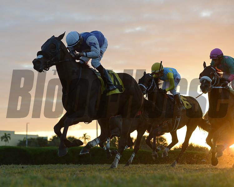 Diligent - Maiden Win, Gulfstream Park West, November 28, 2020<br /> Last race at Gulfstream Park West (aka Calder)<br /> Coglianese Photos/Ryan Thompson