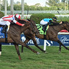 She's My Type wins the 2020 Ginger Brew Stakes at Gulfstream Park<br /> Coglianese Photos/Lauren King