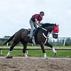 Spun to Run with Jose Correa up  @ Palm Meadows traning Center Fla  Jan 18 2020<br /> ©Joe DiOrio/Winningimages.biz