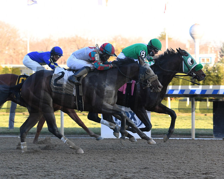 Hold the Salsa wins the 2020 New York Stallion Series Stakes at Aqueduct<br /> Coglianese Photos