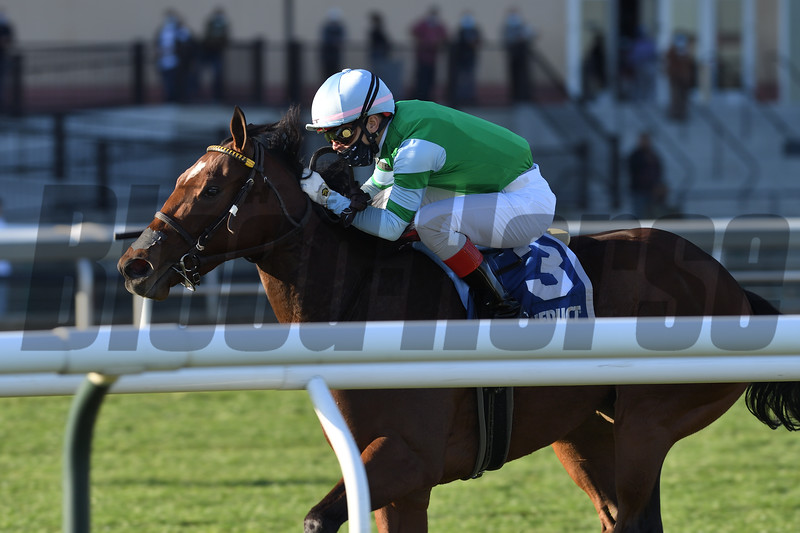 Illegal Smile wins the 2020 Stewart Manor Stakes at Aqueduct<br /> Coglianese Photos/Chelsea Durand
