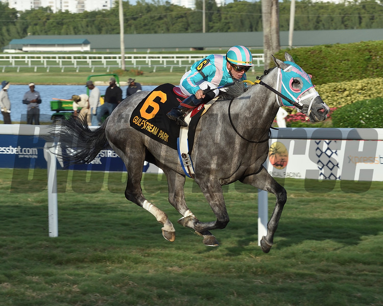Tusk wins the 2020 Tropical Turf Stakes at Gulfstream Park<br /> Coglianese Photos/Lauren King