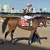 Pink Sands wins the 2020 Inside Information Stakes at Gulfstream Park<br /> Coglianese Photos/Lauren King