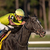 Independence Hall finished second in the Sam F Davis Stakes at Tampa Bay Downs in Tampa Feb 8th 2020. Photo: Joe DiOrio
