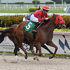 Caramel Chip - Maiden Win, Gulfstream Park, June 19, 2020<br /> Coglianese Photos/Ryan Thompson