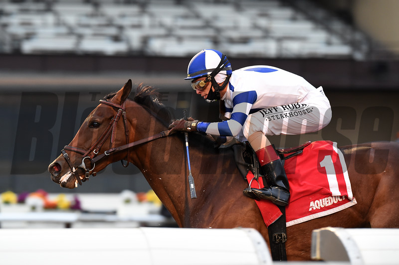 Espresso Shot wins the New York Stallion Series Stakes Sunday, November 22, 2020 at Aqueduct. Photo: Coglianese Photos/Chelsea Durand