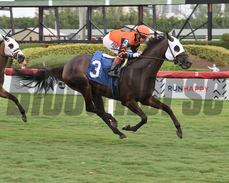 Mai Ty One On wins an allowance optional claiming race Saturday, May 23, 2020 at Gulfstream Park. Photo: Coglianese Photos/Lauren King