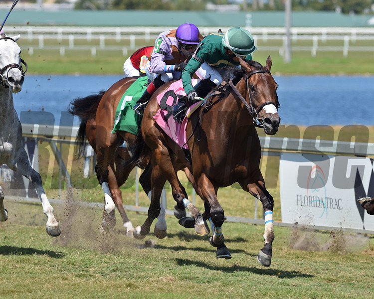 Mimina's Team - Maiden Win, Gulfstream Park, April 2, 2020<br /> Coglianese Photos/Ryan Thompson