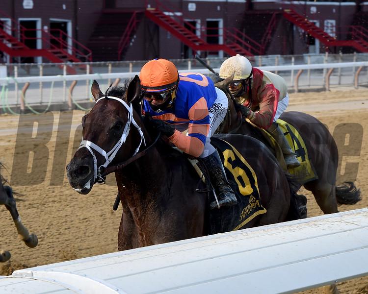 Moretti wins the Birdstone Stakes Sunday, August 2, 2020 at Saratoga. Photo: Coglianese Photos/Chelsea Durand