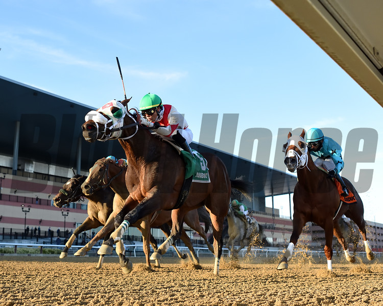 Share the Ride wins the Fall Highweight Handicap Sunday, November 29, 2020 at Aqueduct. Photo: Coglianese Photos