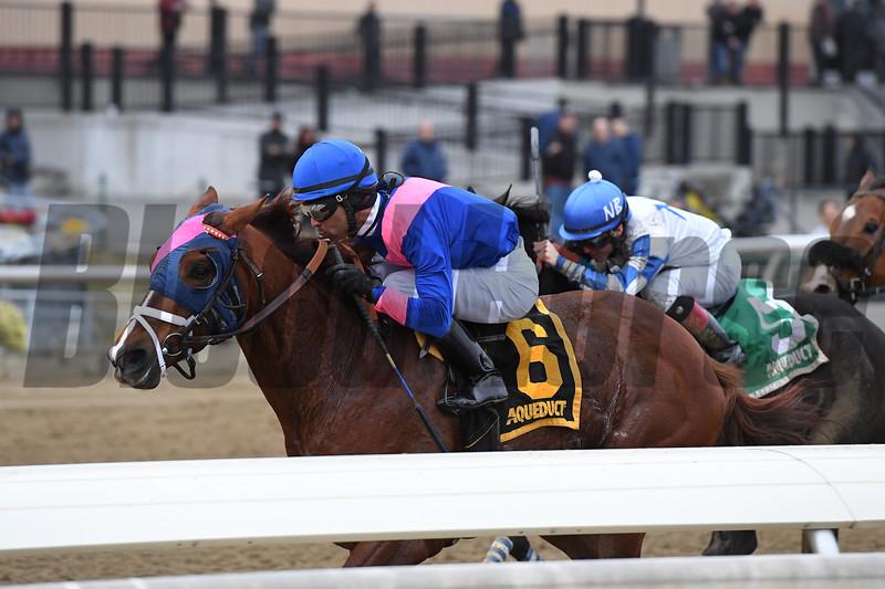 Arthur's Hope wins the 2020 Say Florida Sandy Stakes at Aqueduct<br /> Coglianese Photos/Joe Labozzetta