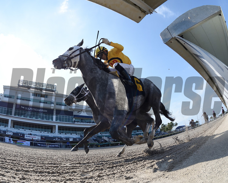 Silverly Enough wins a starter optional claiming race Saturday, April 4, 2020 at Gulfstream Park. Photo: Coglianese Photos/Ryan Thompson