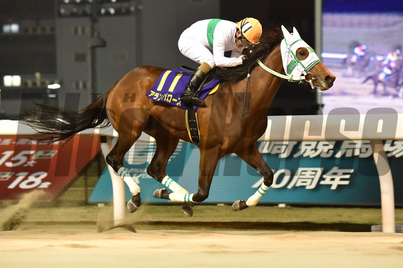 Alain Barows wins the 2020 Zen-Nippon Nisai Yusun<br /> ridden by Seiji Sakai, trained by Masato Hayashi     <br /> Katsumi Saito Photo