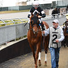 Sir Winston - AOC, Aqueduct, January 31, 2020<br /> Coglianese Photos