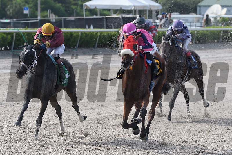 Eye of a Jedi wins the 2020 Sea of Tranquility Stakes at Gulfstream Park<br /> Coglianese Photos/Ryan Thompson