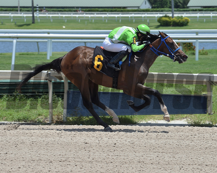 Paladio - Maiden Win, Gulfstream Park, May 28, 2020<br /> Coglianese Photos/Lauren King