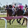 Bemma's Boy wins the 2020 Pan American Stakes at Gulfstream Park   <br /> Coglianese Photos/Derbe Glass