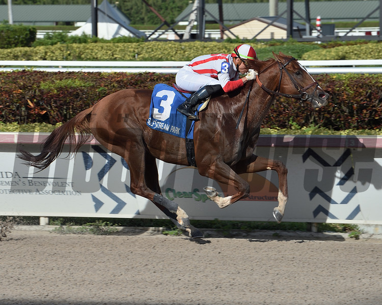 Network Effect wins the 2020 Big Drama Stakes at Gulfstream Park<br /> Coglianese Photos/Lauren King