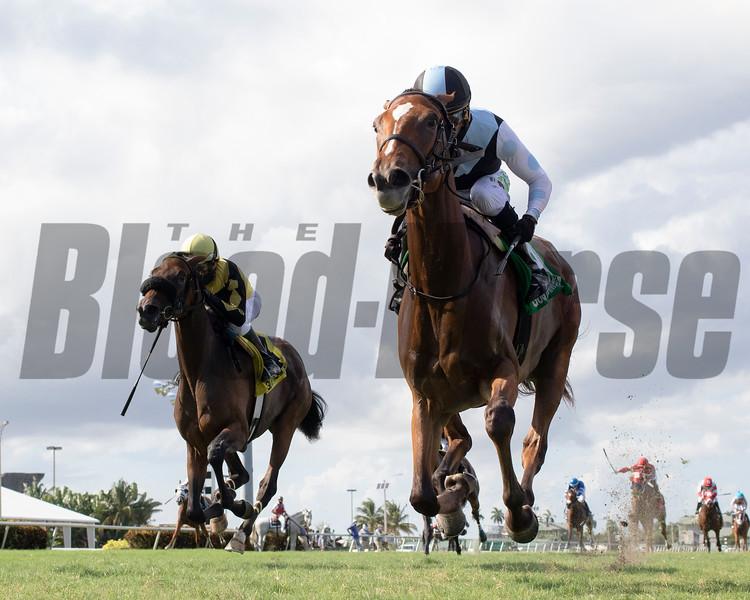 Spanish Loveaffair wins the 2020 Sharp Susan Stakes at Gulfstream Park<br /> Coglianese Photos/Ryan Thompson
