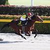 Cafe Pharoah wins the 2020 Hyacinth Stakes at Tokyo Racecourse. Photo: Masakazu Takahashi