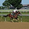 Tiz the Law - Saratoga, July 18, 2020<br /> Coglianese Photos/Susie Raisher
