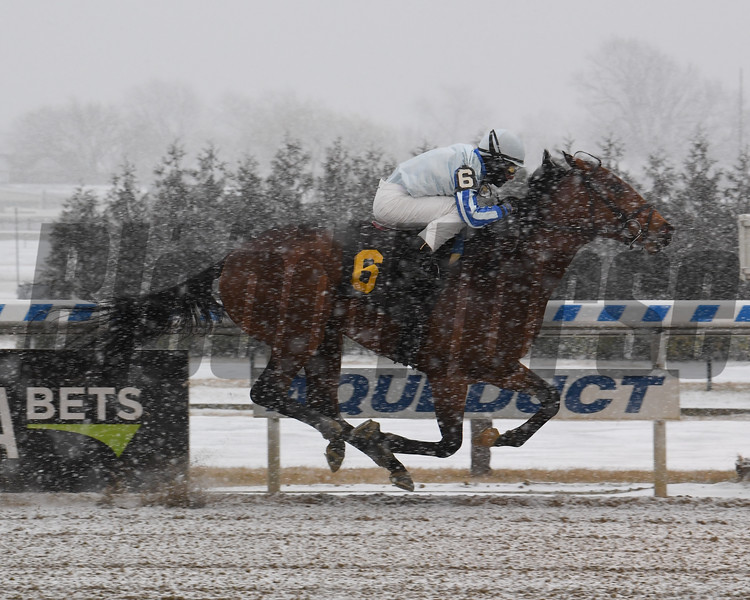 Quixotic wins a maiden special weight January 18, 2020 at Aqueduct. Photo: Coglianese Photos