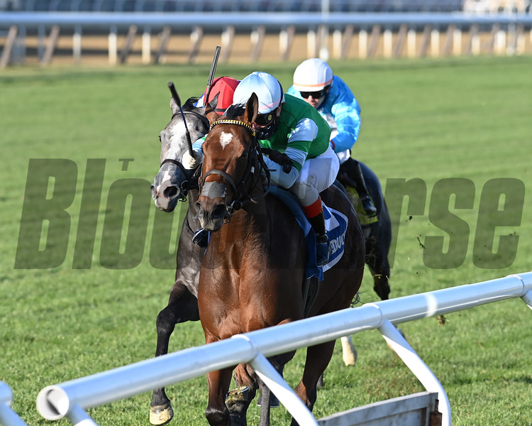 Illegal Smile wins the 2020 Stewart Manor Stakes at Aqueduct<br /> Coglianese Photos/Joe Labozzetta