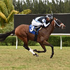 Honorable - Maiden win, Gulfstream Park West, November 25, 2020<br /> Coglianese Photos/Ryan Thompson