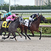 Lady's Island wins the 2020 Sugar Swirl Stakes at Gulfstream Park<br /> Coglianese Photos/Lauren King
