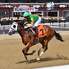 Lookin for Trouble - Maiden Win, Saratoga, August 7, 2020<br /> Coglianese Photos/Chelsea Durand