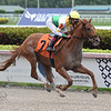 Edge of Fire - Maiden Win, Gulfstream Park, February 1, 2020<br /> Coglianese Phtoos/Lauren King