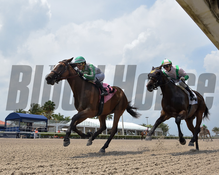 Quinoa Tifah - Maiden Win, Gulfstream Park, April 16, 2020<br /> Coglianese Photos/Ryan Thompson