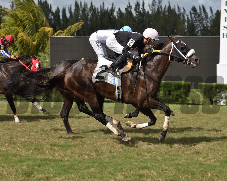 Til the End wins allowance optional claiming Saturday, November 21, 2020 at Gulfstream Park West. Photo: Coglianese Photos/Lauren King