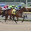 Saratoga Affair - Maiden Win Gulfstream Park, April 12, 2020<br /> Coglianese Photos/Lauren King