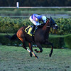 Diligent - Maiden Win, Gulfstream Park West, November 28, 2020<br /> Last race at Gulfstream Park West (aka Calder)<br /> Coglianese Photos/Nicole Thomas