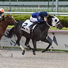 Romantical Note - Maiden win, Gulfstream Park, December 11, 2020<br /> Coglianese Photos/Ryan Thompson