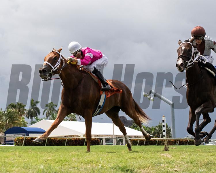 Tournesol wins the 2020 Portofino Bay Stakes at Gulfstream Park<br /> Coglianese Photos/Ryan Thompson