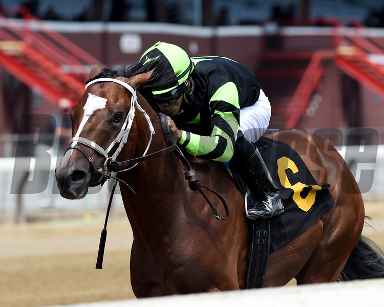 Effinity wins maiden special weight Sunday, July 26, 2020 at Saratoga Race Course. Photo: Coglianese Photos/Chelsea Durand