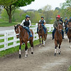 Caption: Owendale with Martin Garcia leads the Brad Cox racing string to the track.<br /> Keeneland scenes and horses on April 25, 2020 Keeneland in Lexington, KY.