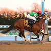 Mischevious Alex wins the 2020 Gotham Stakes at Aqueduct<br /> Coglianese Photos/Viola Jasko